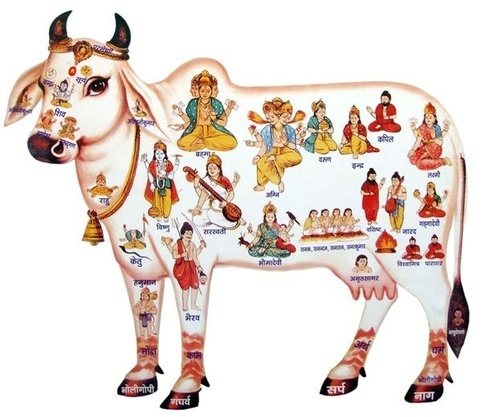 Why is the Cow worshipped by Hindus ?