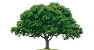 Be Nice to Trees